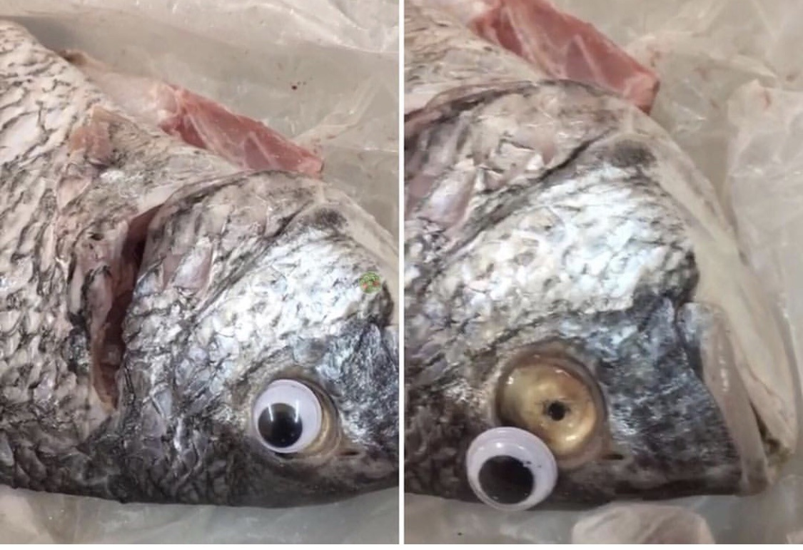 Fish Market Shut Down For Putting Fake Googly Eyes On Fish To Make Them Look 'Fresher'